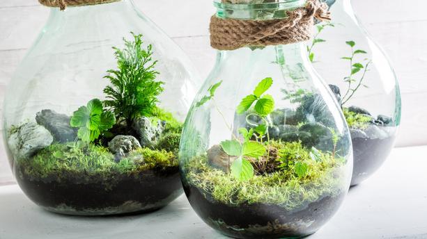 d corez votre maison avec une plante en terrarium p pini res raymond. Black Bedroom Furniture Sets. Home Design Ideas